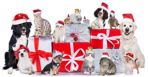 Pet presents